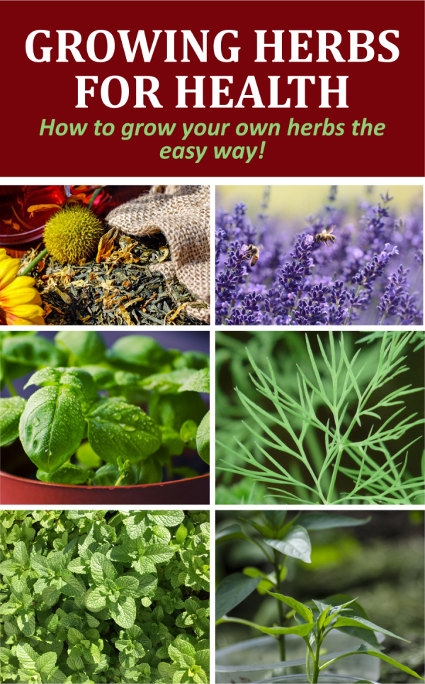 growing-herbs-for-health